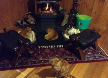 in front of the fire