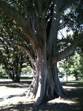 Sam's Tree (2)