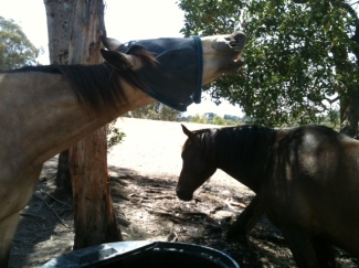 Whisky and Axl at the water trough